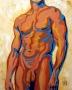 torso_masculino
