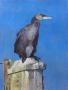 cormoran_low