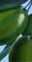 1 Olives